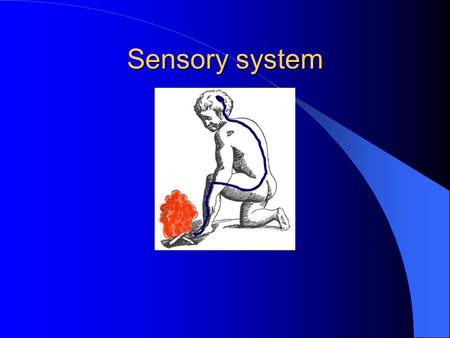 Sensory system. Spino-thalamic tract Posterior tract.