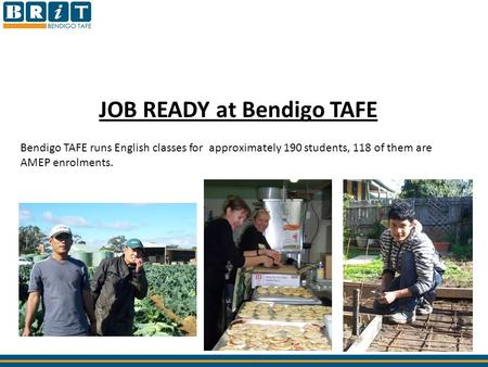 JOB READY at Bendigo TAFE Bendigo TAFE runs English classes for approximately 190 students, 118 of them are AMEP enrolments.