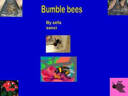 By sefa sanci · ·· Antenni Fine breakable wings Black and white and yellow body · 2 sets of wings It has a sting What do bumble bees look like. beebee.