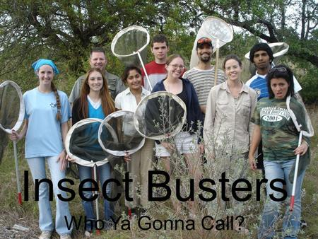 Insect Hunters Insect Busters Who Ya Gonna Call?.