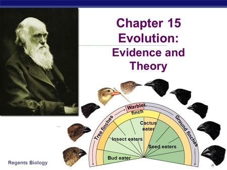 Regents Biology 2006-2007 Insect eaters Bud eater Seed eaters Cactus eater Warbler finch Tree finches Ground finches Chapter 15 Evolution: Evidence and.