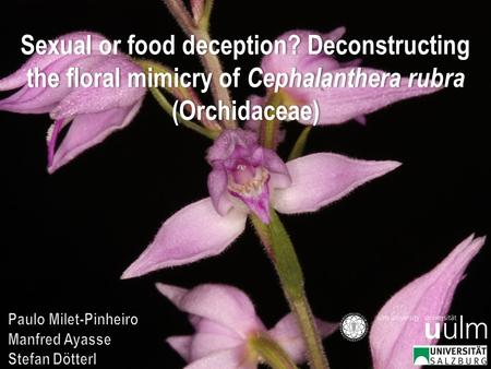 Sexual or food deception? Deconstructing the floral mimicry of Cephalanthera rubra (Orchidaceae)