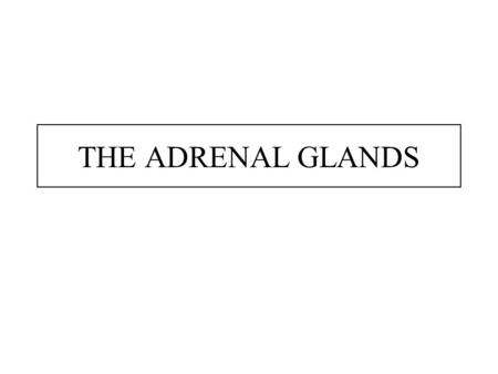 THE ADRENAL GLANDS. The Adrenal Gland Anatomy was first described in 1563. Is located above (or attached to) the upper pole of the kidney. Is pyramidal.