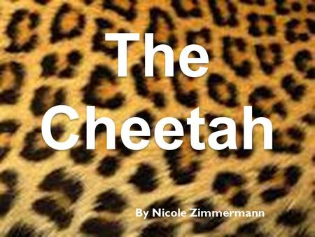 The Cheetah By Nicole Zimmermann.