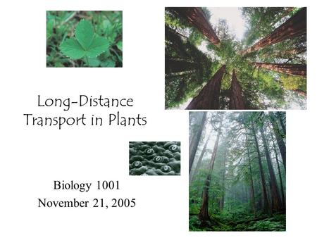 Long-Distance Transport in Plants Biology 1001 November 21, 2005.