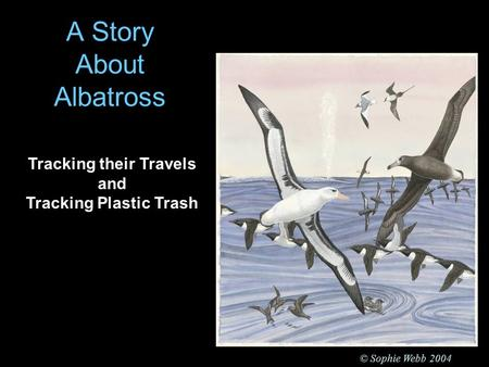 A Story About Albatross © Sophie Webb 2004 Tracking their Travels and Tracking Plastic Trash.