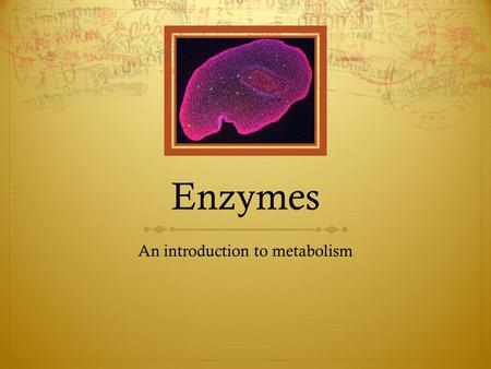 Enzymes An introduction to metabolism. The purpose of an enzyme in a cell is to allow the cell to carry out chemical reactions very quickly. These reactions.