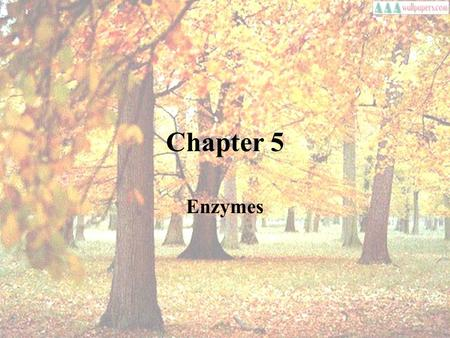Chapter 5 Enzymes. Enzymes as organic catalysts Enzyme is for lowering of activation energy.Enzyme is for lowering of activation energy.