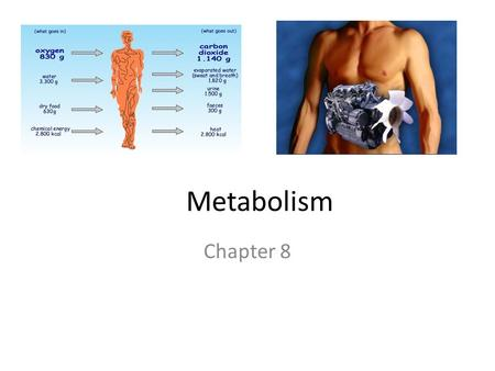 Metabolism Chapter 8. I. Thermodynamics Metabolism All the chemical reactions in an organism.