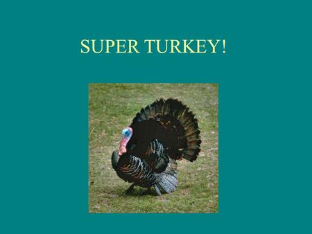 SUPER TURKEY!. I'll tell you a story 'bout a little bird. Strangest story you've every heard. Super Turkey is his name, And getting' away is how he earned.