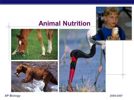 AP Biology 2006-2007 Animal Nutrition AP Biology What do animals need to live? O2O2 food ATP  Animals make __________ using:  ____________  Animals.