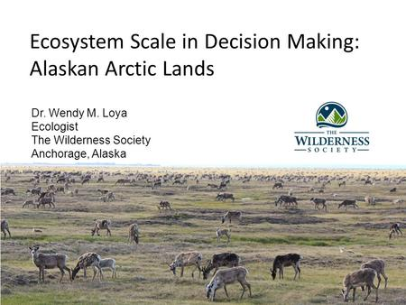 Ecosystem Scale in Decision Making: Alaskan Arctic Lands Dr. Wendy M. Loya Ecologist The Wilderness Society Anchorage, Alaska.