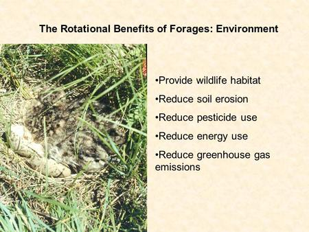The Rotational Benefits of Forages: Environment Provide wildlife habitat Reduce soil erosion Reduce pesticide use Reduce energy use Reduce greenhouse gas.