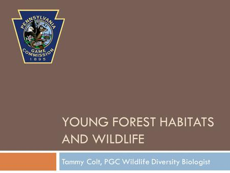 YOUNG FOREST HABITATS AND WILDLIFE Tammy Colt, PGC Wildlife Diversity Biologist.