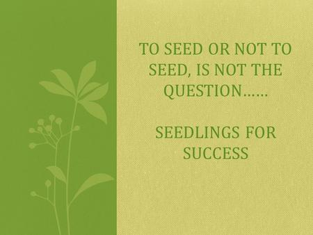 TO SEED OR NOT TO SEED, IS NOT THE QUESTION…… SEEDLINGS FOR SUCCESS.