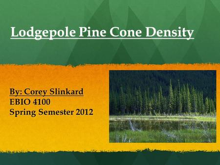 Lodgepole Pine Cone Density By: Corey Slinkard EBIO 4100 Spring Semester 2012.