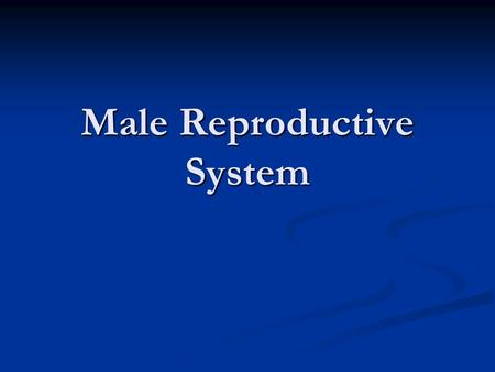 Male Reproductive System. 1. At puberty, hormones released by the pituitary gland stimulate the testes. 1. At puberty, hormones released by the pituitary.