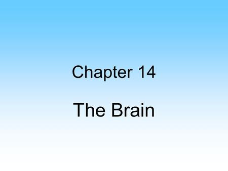 Chapter 14 The Brain. Medulla Oblongata Regulates heartbeat and respirations Blood vessel diameter Decussation Reflexes: –Swallowing –Vomiting.
