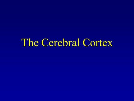 The Cerebral Cortex. The Evolving Brain Different animal species have many structures in common, including a cerebellum and cortex. The cortex is much.