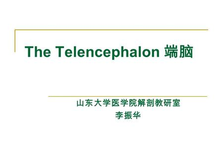 The Telencephalon 端脑 山东大学医学院解剖教研室 李振华. General Appearance of Cerebrum The telencephalon consists of right and left cerebral hemisphere, partially separated.