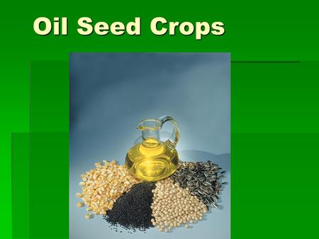 Oil Seed Crops. Oil Seed Crops 5 Major  Soybeans  Peanuts  Safflower  Flax  Sunflower.