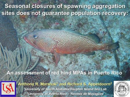 Seasonal closures of spawning aggregation sites does not guarantee population recovery: Anthony R. Marshak 1 and Richard S. Appeldoorn 2 1 University of.
