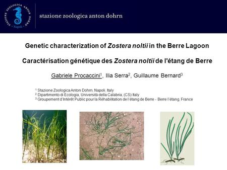 Genetic characterization of Zostera noltii in the Berre Lagoon Caractérisation génétique des Zostera noltii de l'étang de Berre Gabriele Procaccini 1,