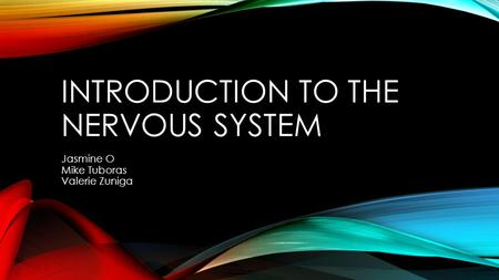 INTRODUCTION TO THE NERVOUS SYSTEM Jasmine O Mike Tuboras Valerie Zuniga.