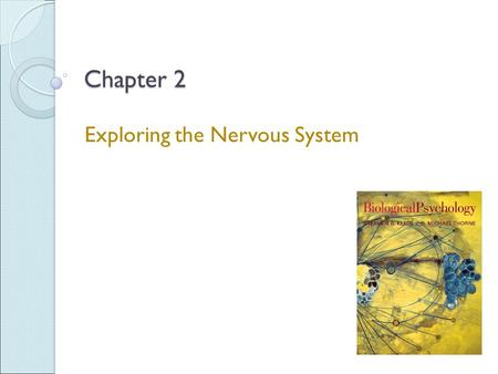 Chapter 2 Exploring the Nervous System. Anatomical Views Horizontal section - Shows structures viewed from above Sagittal section - Divides structures.