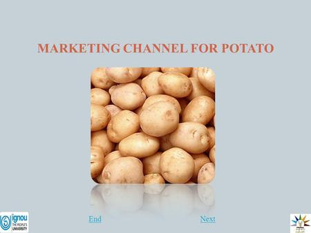 thesis on production and marketing of potato Potato is important for its contribution to food security and as source of cash income for a large proportion of the rural households however, enhancing potato.