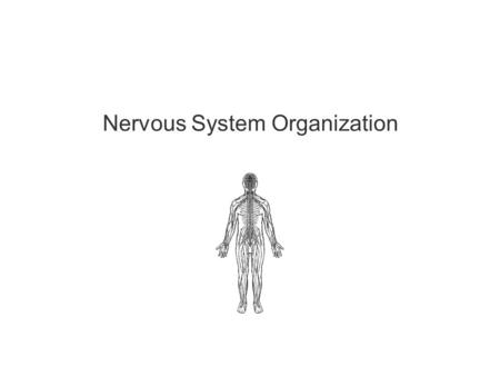 "Nervous System Organization. 2 Much of the text material is from, ""Principles of Anatomy and Physiology, 14th edition"" by Gerald J. Tortora and Bryan."