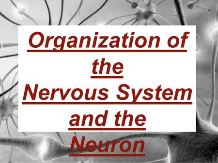 Organization of the Nervous System and the Neuron.