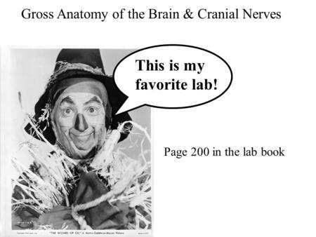 This is my favorite lab! Gross Anatomy of the Brain & Cranial Nerves Page 200 in the lab book.