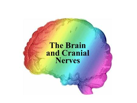 The Brain and Cranial Nerves. Cerebrum  Largest part of brain  Controls higher mental functions  Divided into left and right cerebral hemispheres 