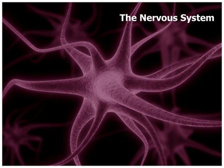 The Nervous System The master controlling and communicating system of the body. Vital in maintaining homeostasis Two divisions: – Central Nervous System.