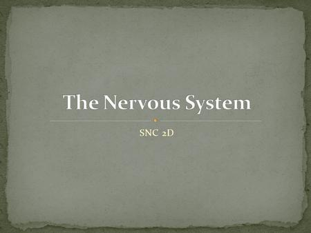 SNC 2D. The organ system that is made up of the brain, spinal cord, and the peripheral nerves System that senses the environment and coordinates appropriate.