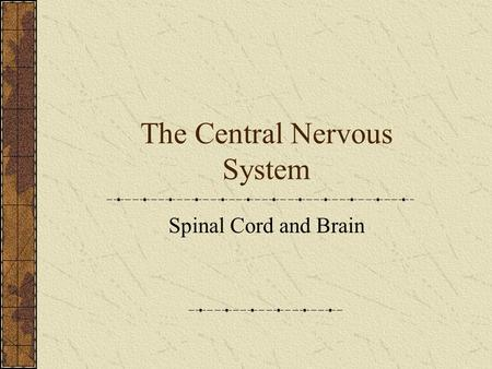 The Central Nervous System Spinal Cord and Brain.
