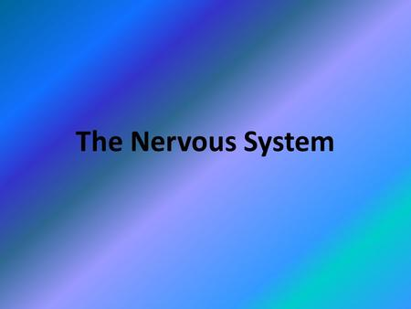 The Nervous System. Copyright © 2010 Pearson Education, Inc. Central nervous system (CNS) Brain and spinal cord Integrative and control centers Peripheral.