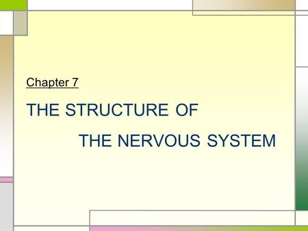Chapter 7 THE STRUCTURE OF THE NERVOUS SYSTEM. INTRODUCTION  Nervous System  The structure of the nervous system will tell us about brain function 
