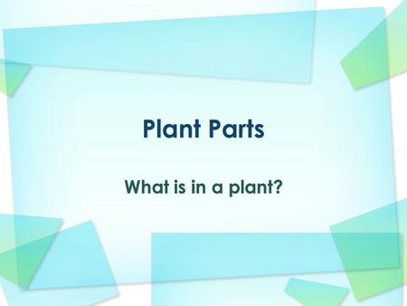 What is in a plant?. Why are plants important? Plants are essential for life on our planet. They provide all the energy for the ecosystem, because they.