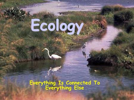 Ecology Everything Is Connected To Everything Else.