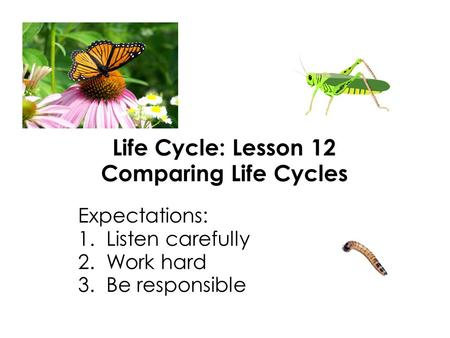 Life Cycle: Lesson 12 Comparing Life Cycles Expectations: 1. Listen carefully 2. Work hard 3. Be responsible.