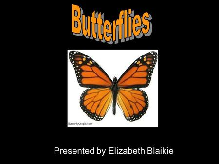 Presented by Elizabeth Blaikie. Butterfly Anatomy.