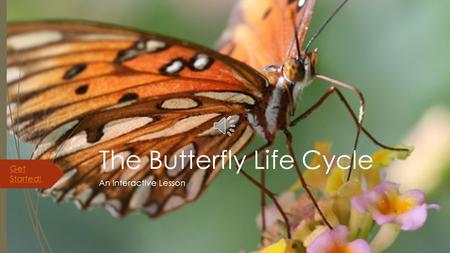 The Butterfly Life Cycle An Interactive Lesson Get Started!