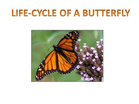You will be able to Identify the stages in a butterfly life cycle Create a model of a complete butterfly life cycle Demonstrate the correct order of a.