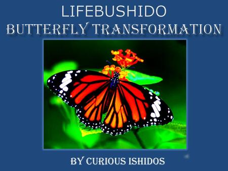 By Curious Ishidos. A Three Dimensional Comparison of the development of a butterfly to the different components of Lifebushido.