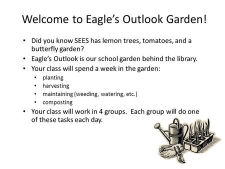 Welcome to Eagle's Outlook Garden! Did you know SEES has lemon trees, tomatoes, and a butterfly garden? Eagle's Outlook is our school garden behind the.
