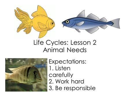 Life Cycles: Lesson 2 Animal Needs Expectations: 1. Listen carefully 2. Work hard 3. Be responsible.