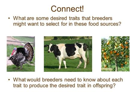 Connect! What are some desired traits that breeders might want to select for in these food sources? What would breeders need to know about each trait to.