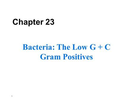 1 Chapter 23 Bacteria: The Low G + C Gram Positives.
